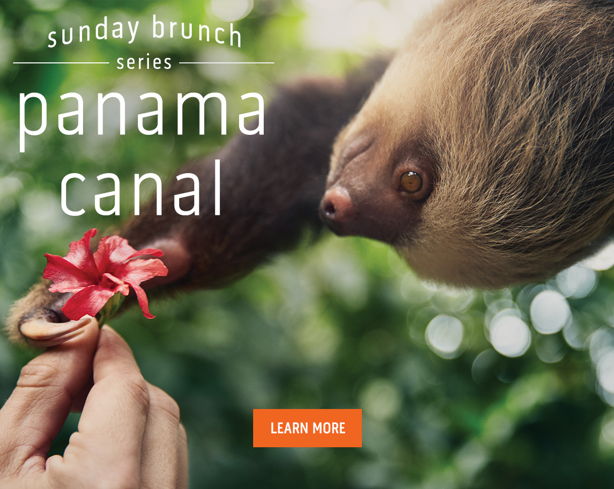 sunday brunch series: Panama Canal - image of a sloth grabbing a flower - learn more