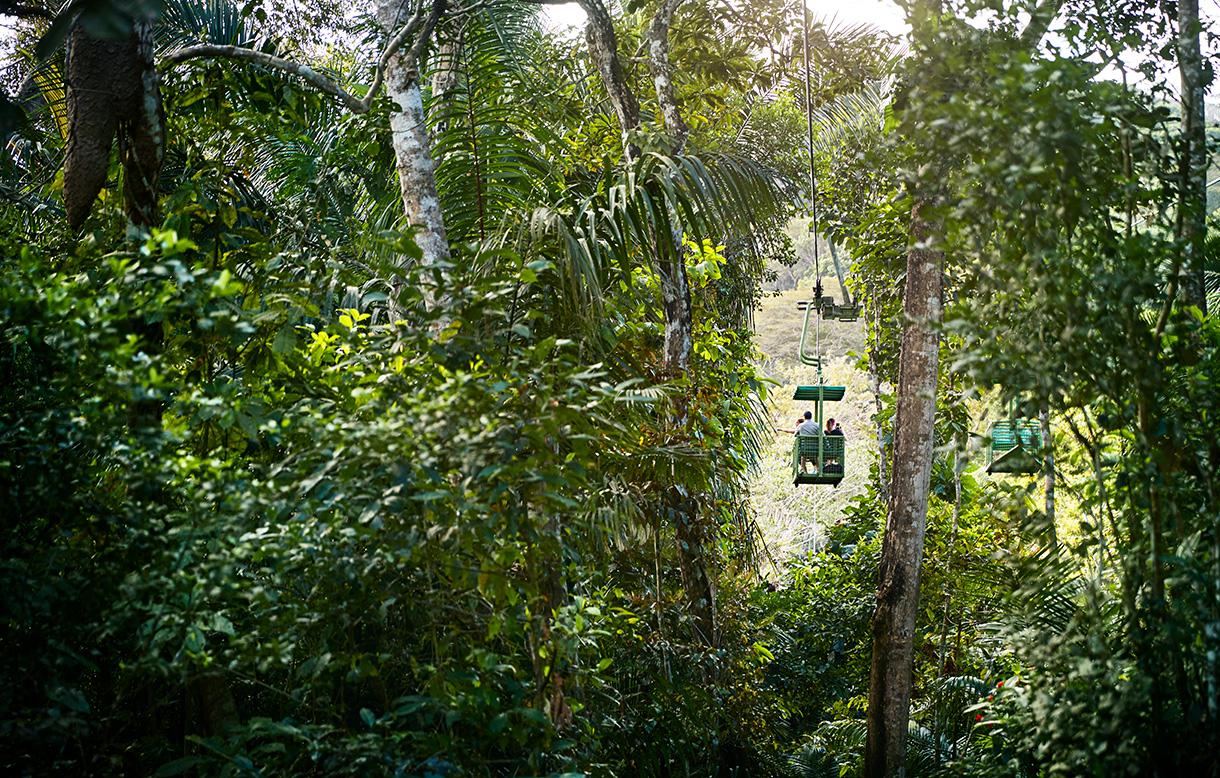 a gondola going through the jungle
