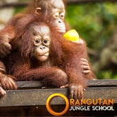 Orangutan Jungle School