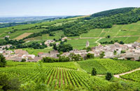 Food & Wine of France: Paris, Burgundy & Provence