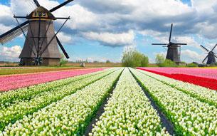 Cruising Holland & Belgium in Bloom