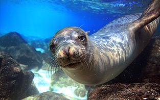 Explore Wildlife Wonders in the Galápagos