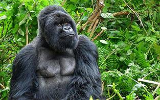 Uganda: Gorillas & Beyond