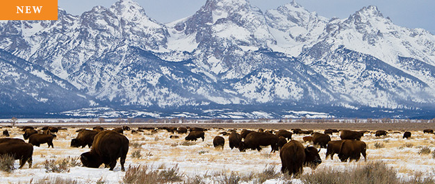 Tailor Made Wyoming