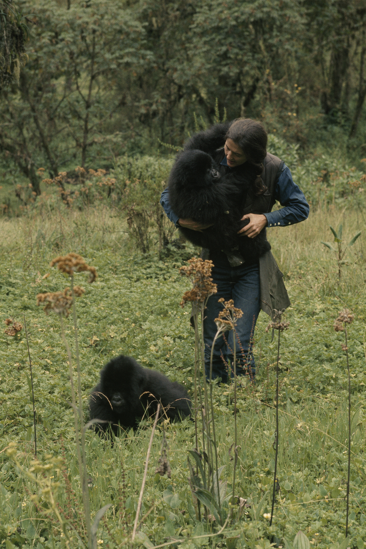 Dian Fossey: Secrets of the Mist